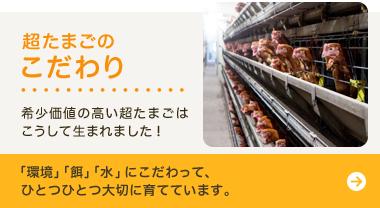 田所養鶏場の超たまごのこだわり